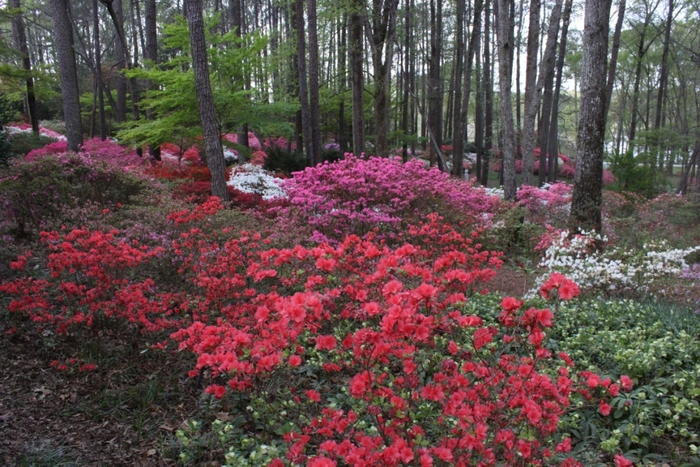 Georgia in Springtime – March, 2012