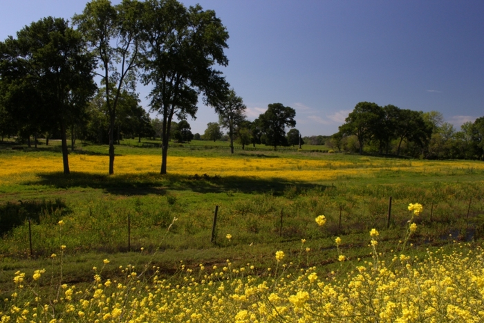 Texas Wildflowers – March 26, 2012