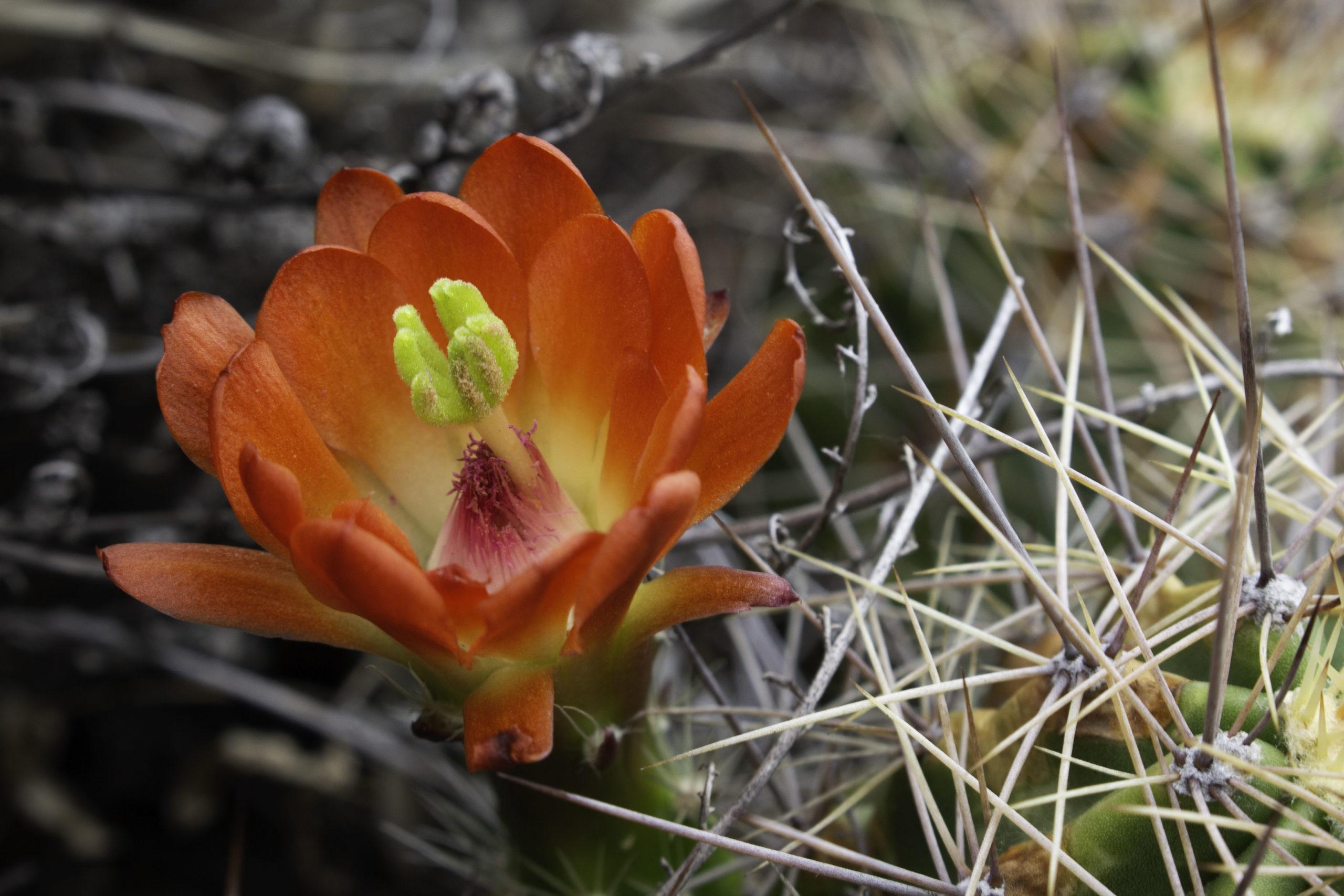 Texas Wildflowers 2020 – 2021